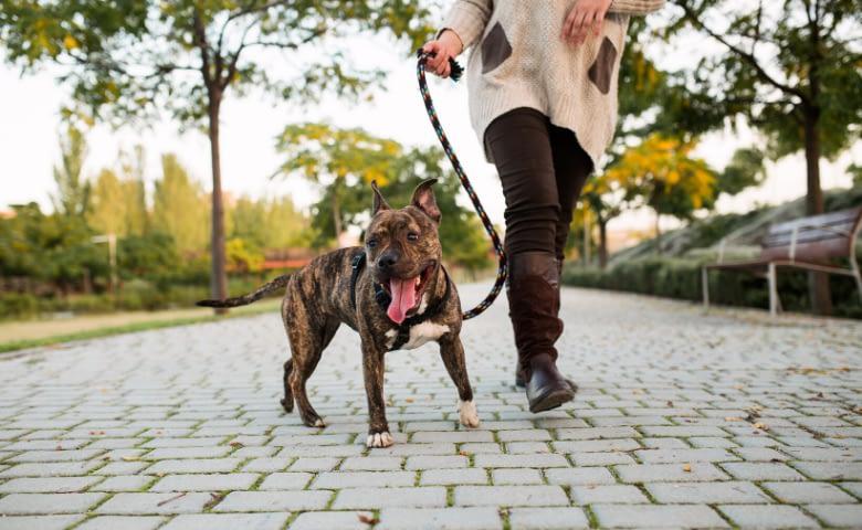 start dog walking
